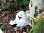 Hedwig oder so